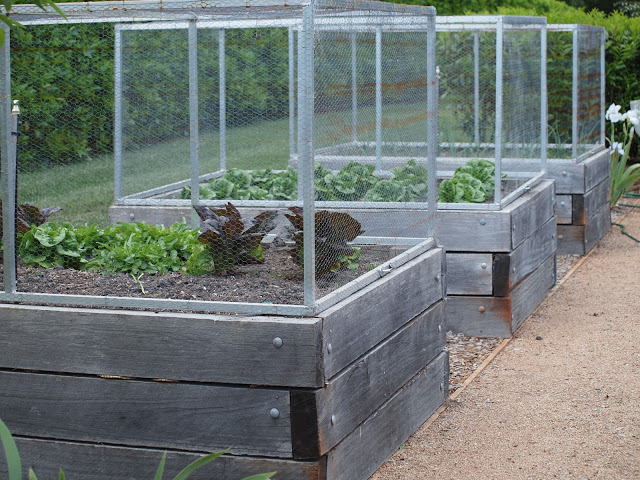 vegetable-beds-17-aluminium-cages-for-planters